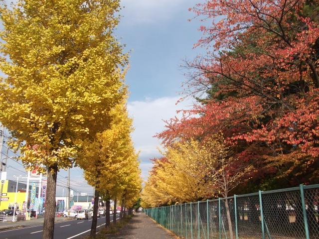 運動公園の銀杏並木
