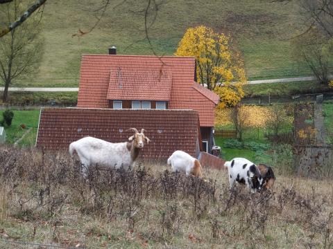 Hohenhundersingenよりの眺め5