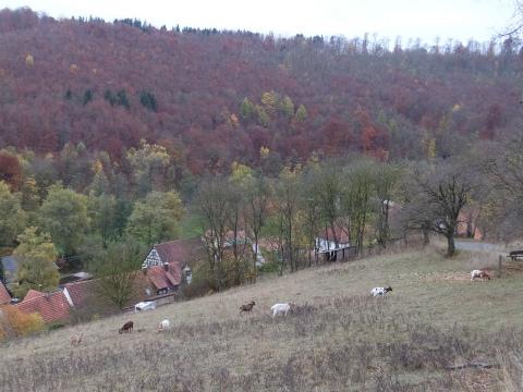 Hohenhundersingenよりの眺め4