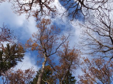 シューンブーフ散歩の秋の空