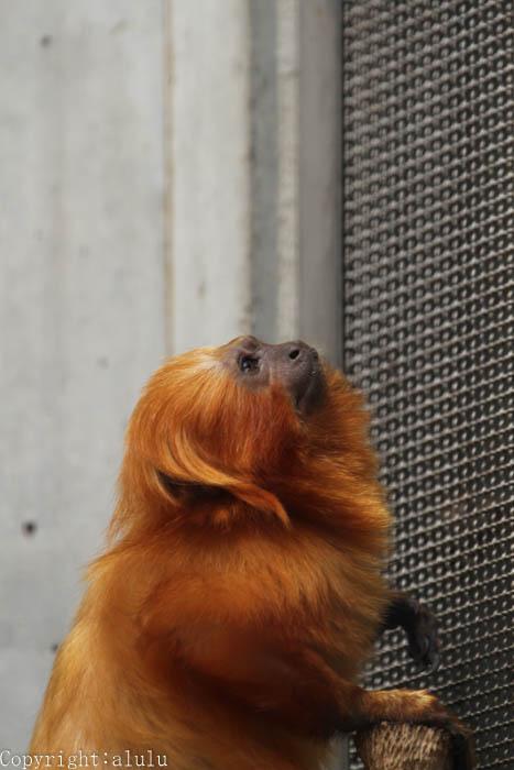 浜松市動物園 ここにしかいない サル