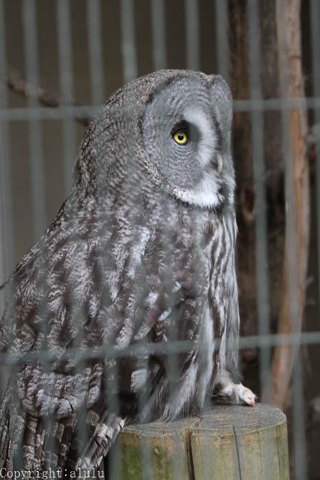 天王寺動物園 動物写真
