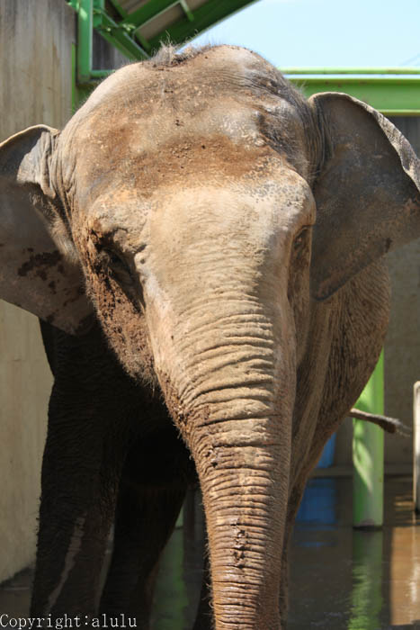 山梨県 動物園 ゾウ