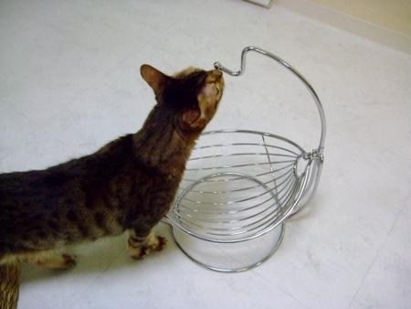 フルーツバスケット コストコ  お猫様のハンモックになったりして・・・