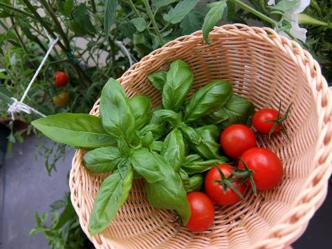 ベランダ菜園 トマト バジル
