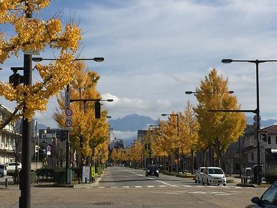 富山護国神社前イチョウ20151116