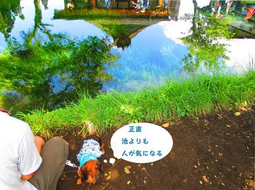 2015-09-yamanasi31.jpg