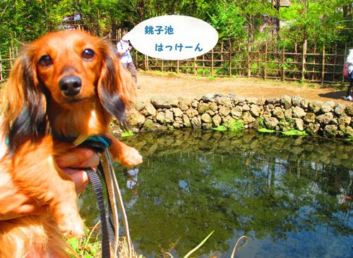 2015-09-yamanasi42.jpg