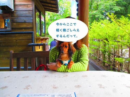 2015-09-yamanasi48.jpg
