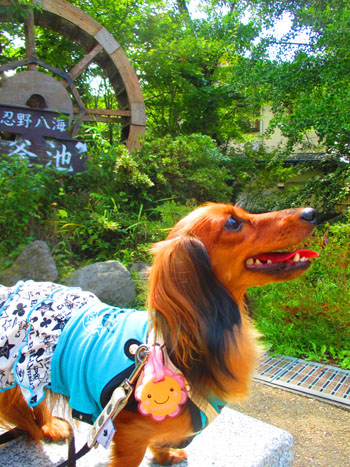 2015-09-yamanasi53.jpg