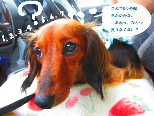 2015-09-yamanasi72.jpg