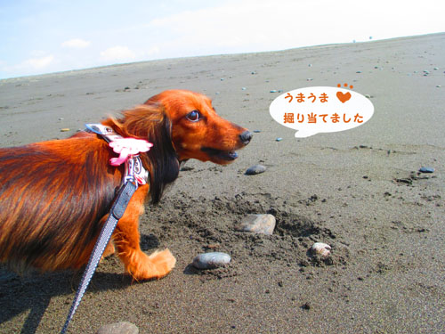 2015-10-umi18.jpg