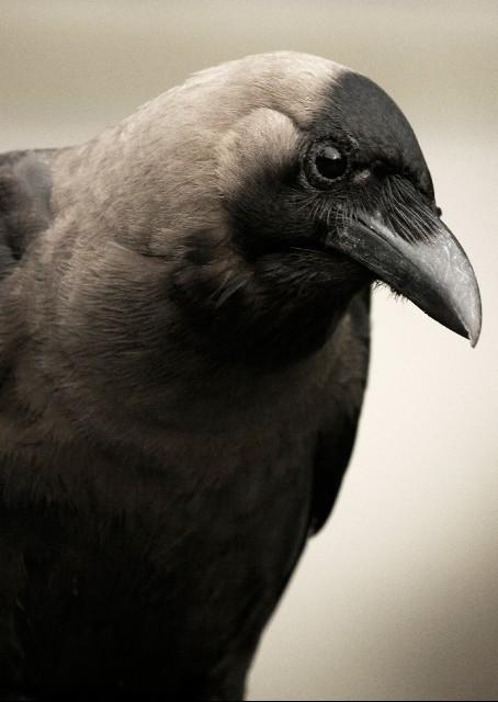 【原因不明】東京でカラスが謎の大量死…半径約20メートル内で約50羽も