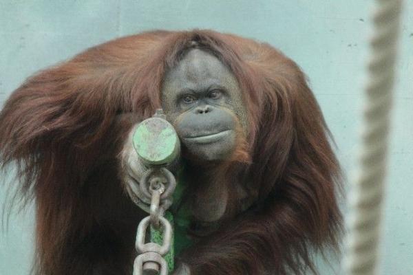 monkey457098.jpg