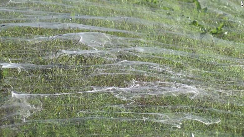 アメリカで「蜘蛛」の大群が出現 「まるでホラー映画」