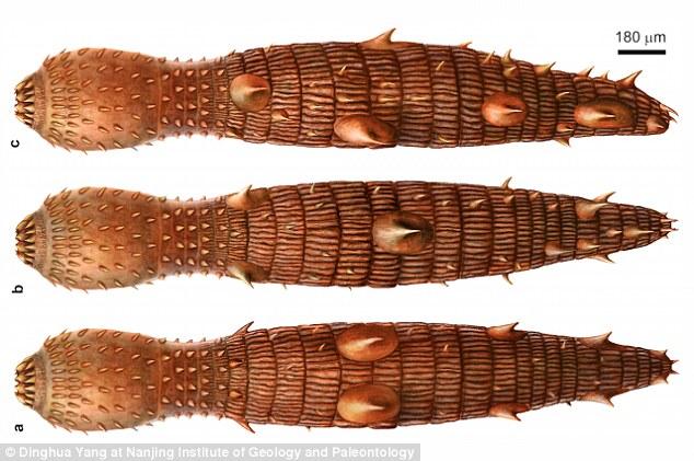 中国で新種の「マッドドラゴン」呼ばれる古生物が発見される!