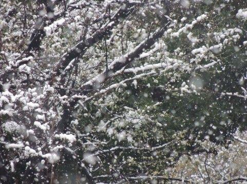 気象庁「エルニーニョが継続中、暖冬になる見込み」
