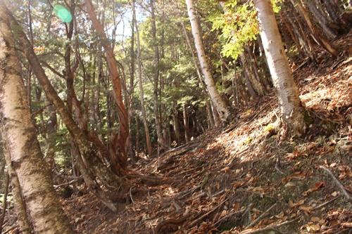 カモシカ登山道14