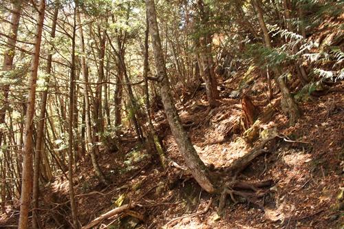 カモシカ登山道19