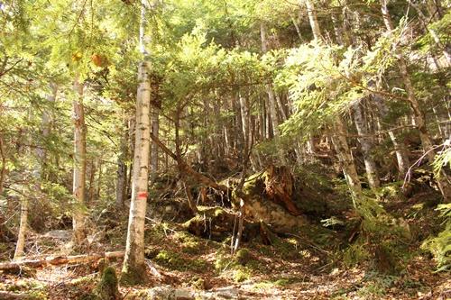カモシカ登山道24