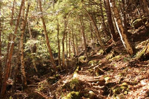 カモシカ登山道26