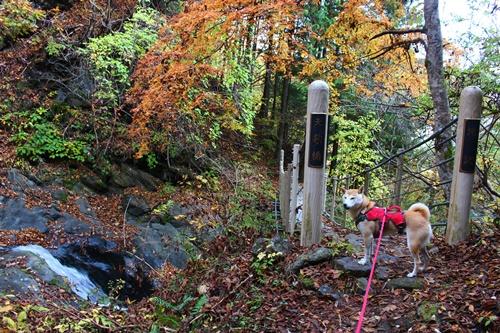 吊り橋コースへ3