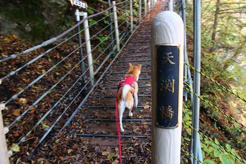 吊り橋コースへ8