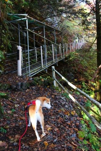 吊り橋コースへ7