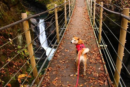 吊り橋コースへ17
