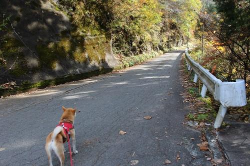 吊り橋コースへ39