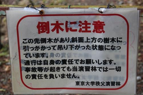 大川渓谷13